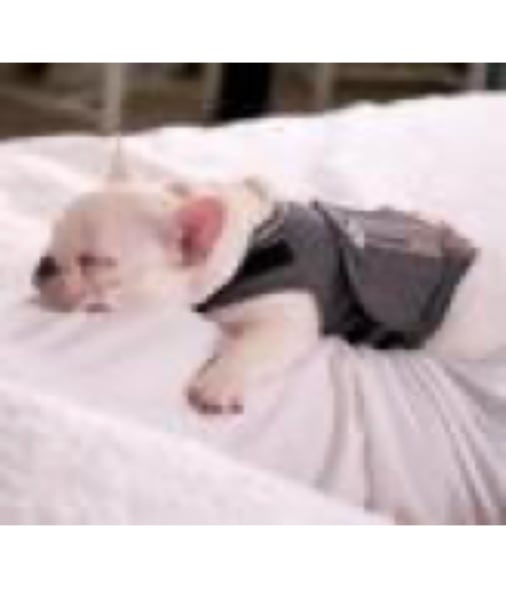Puppy asleep on a bed relaxing with a Thundershirt on.
