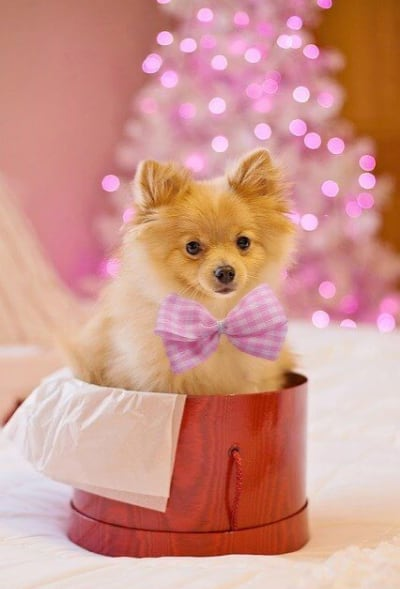 Holiday pet safety. Pretty dog sits in a big hat wearing pink bow tie and behind him is a beautiful pink Christmas tree.