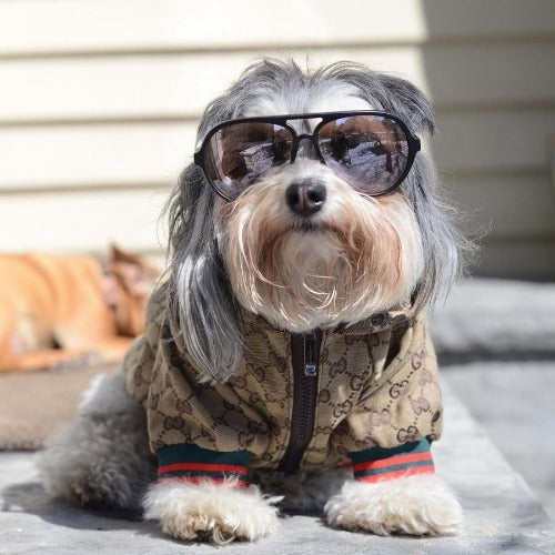 Chloescozycollection Gucci Inspired Dog Jacket With Hood Chloe S Cozy Collection
