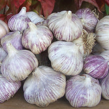 Load image into Gallery viewer, Organic purple garlic - loose bulbs 1kg