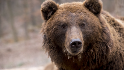 Basic safety and precautionary tips for dealing with bears and other wild animals