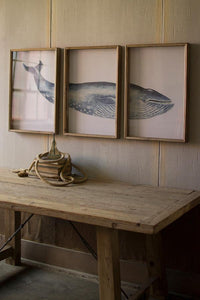 Framed Whale Triptych