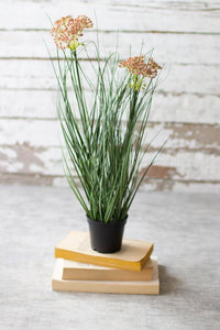 Potted Onion Grass w/Flowers