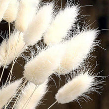 Load image into Gallery viewer, White tail grass stems