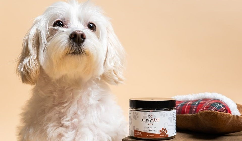 How much CBD products are useful for pet caring?