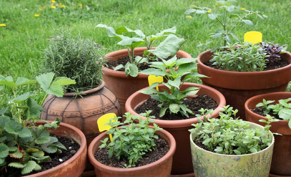 9 Plants That Promote Personal Wellness