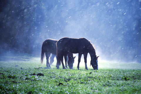 Rainfall at foggy countryside meadow field with brown horses.