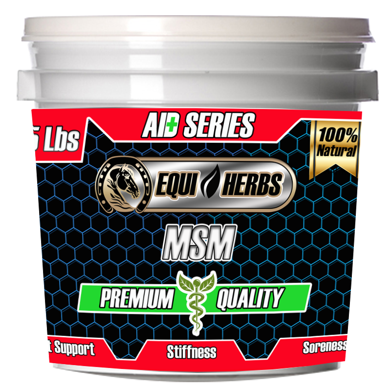 msm for horses horse supplements