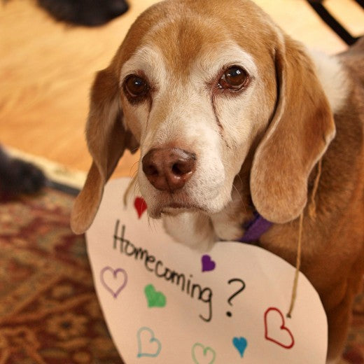 Homecoming proposal using a pet
