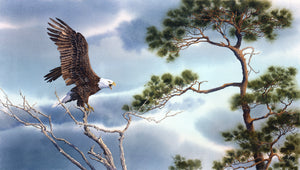 Bald Eagle in the Pines