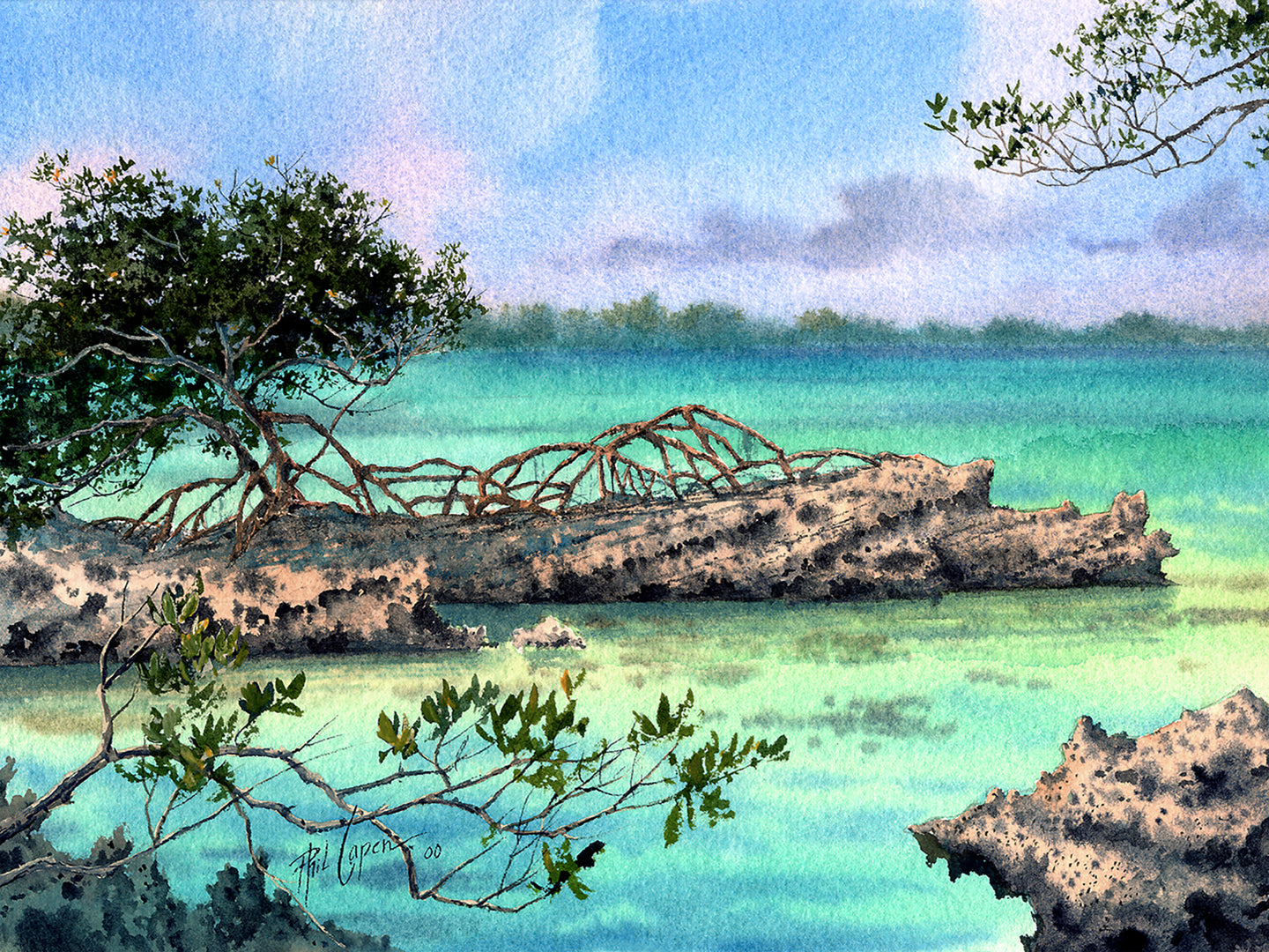 Mangrove on the Rocks