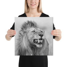 Load image into Gallery viewer, A Lion's Stare - A Collection Of Goods