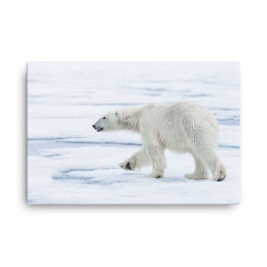 Polar Bear on Pack Ice - A Collection Of Goods