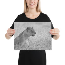 Load image into Gallery viewer, The Focus of a Lioness - A Collection Of Goods