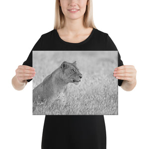 The Focus of a Lioness - A Collection Of Goods