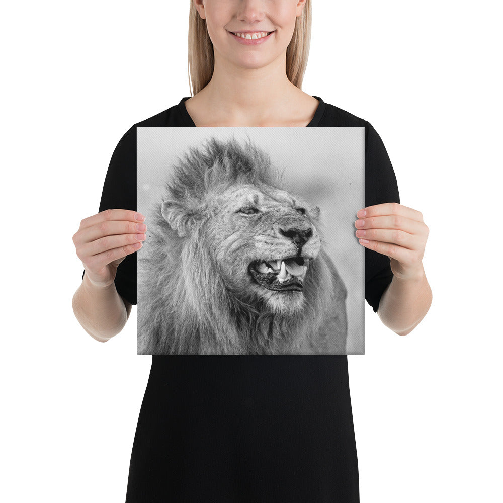 A Lion's Stare - A Collection Of Goods