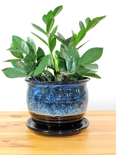 Blue and Black 8 inch planter