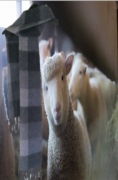 https://www.woolmark.com/about-wool/wellness/science-good-night-sleep/b