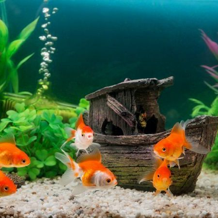 Aquarium & Fish Accessories