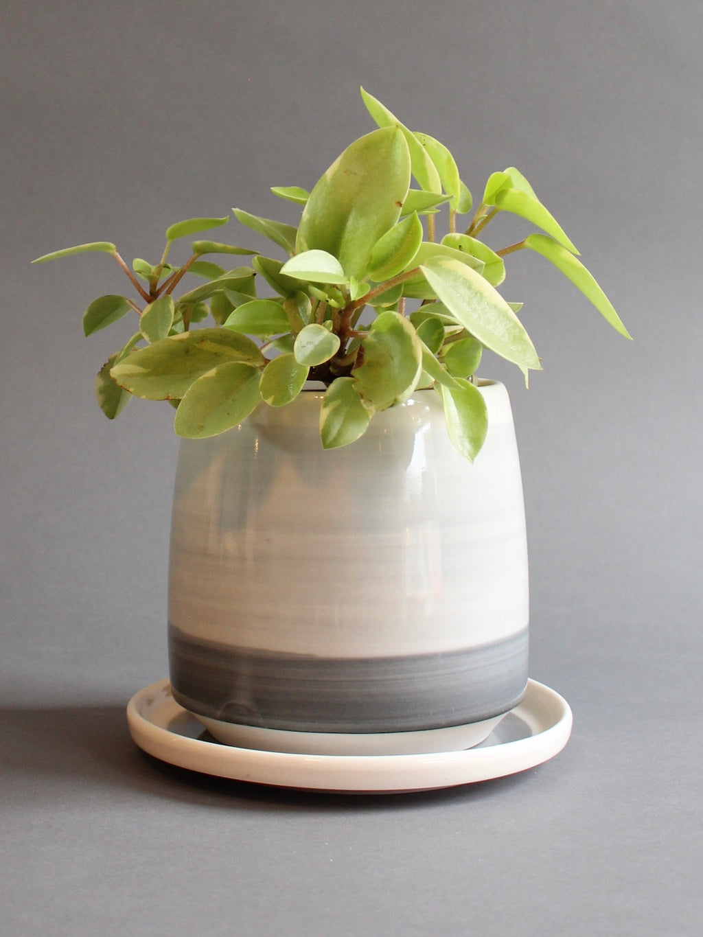 Medium Planter with Saucer - Morning Fog