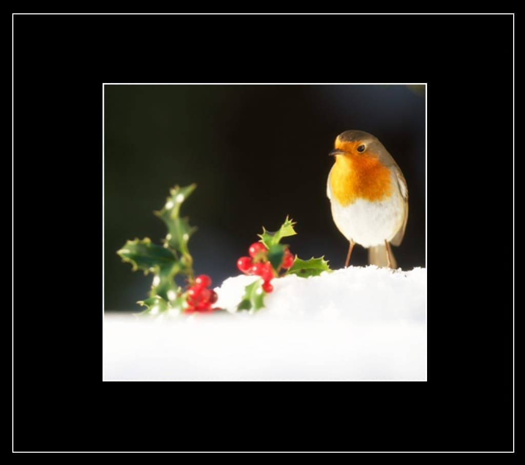 Bobbin the Robin Greetings Card - Country Matters