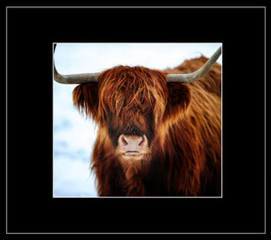 Christmas Highland Greetings Card - Country Matters