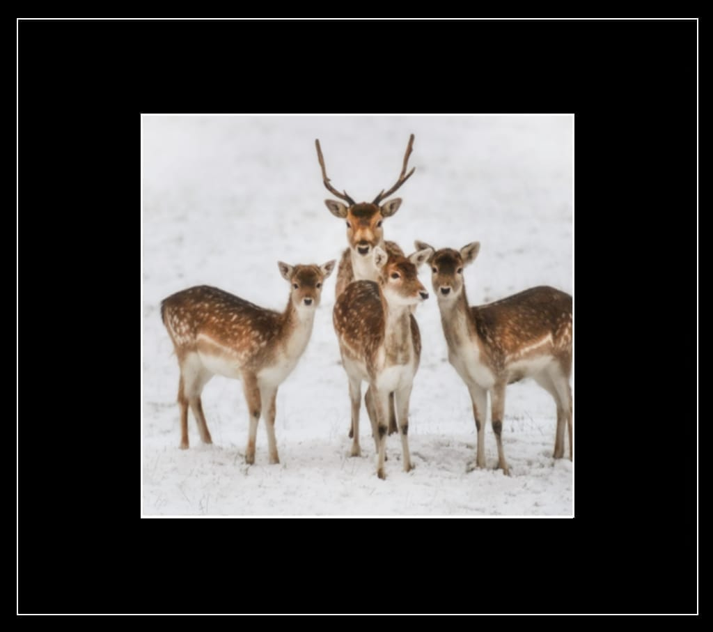 Fallow Family Greetings Card - Country Matters