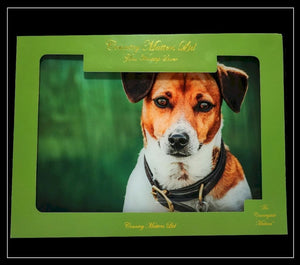 Amber Jack Russell Glass Worktop Saver - Country Matters