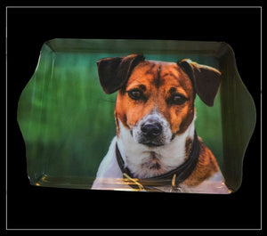 Amber Jack Russell Trinket Tray - Country Matters
