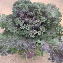 Load image into Gallery viewer, Flowering Kale