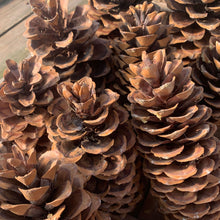 Load image into Gallery viewer, Christmas Pinecones