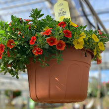 Load image into Gallery viewer, Hanging Baskets Grown by Al's