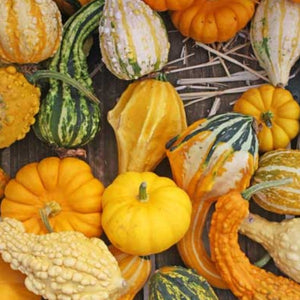 Specialty Gourds