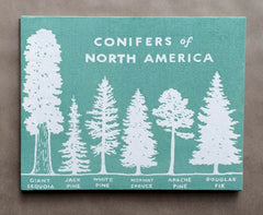 conifers of North America