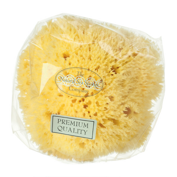 Hydréa London Honeycomb Sea Sponge