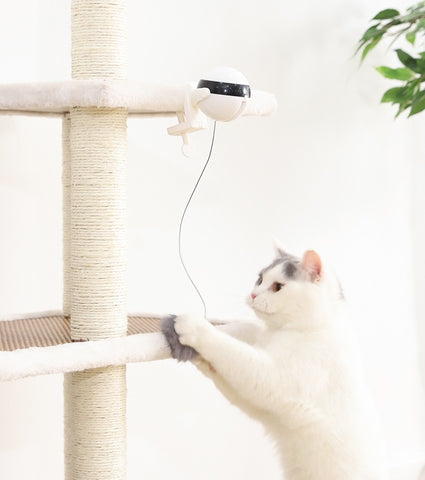 Wow Jewelry Shop Electronic Motion Cat Toy