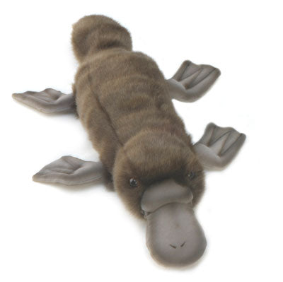 "15.7"" (40 cm) Platypus - Swimming [plush toy]"