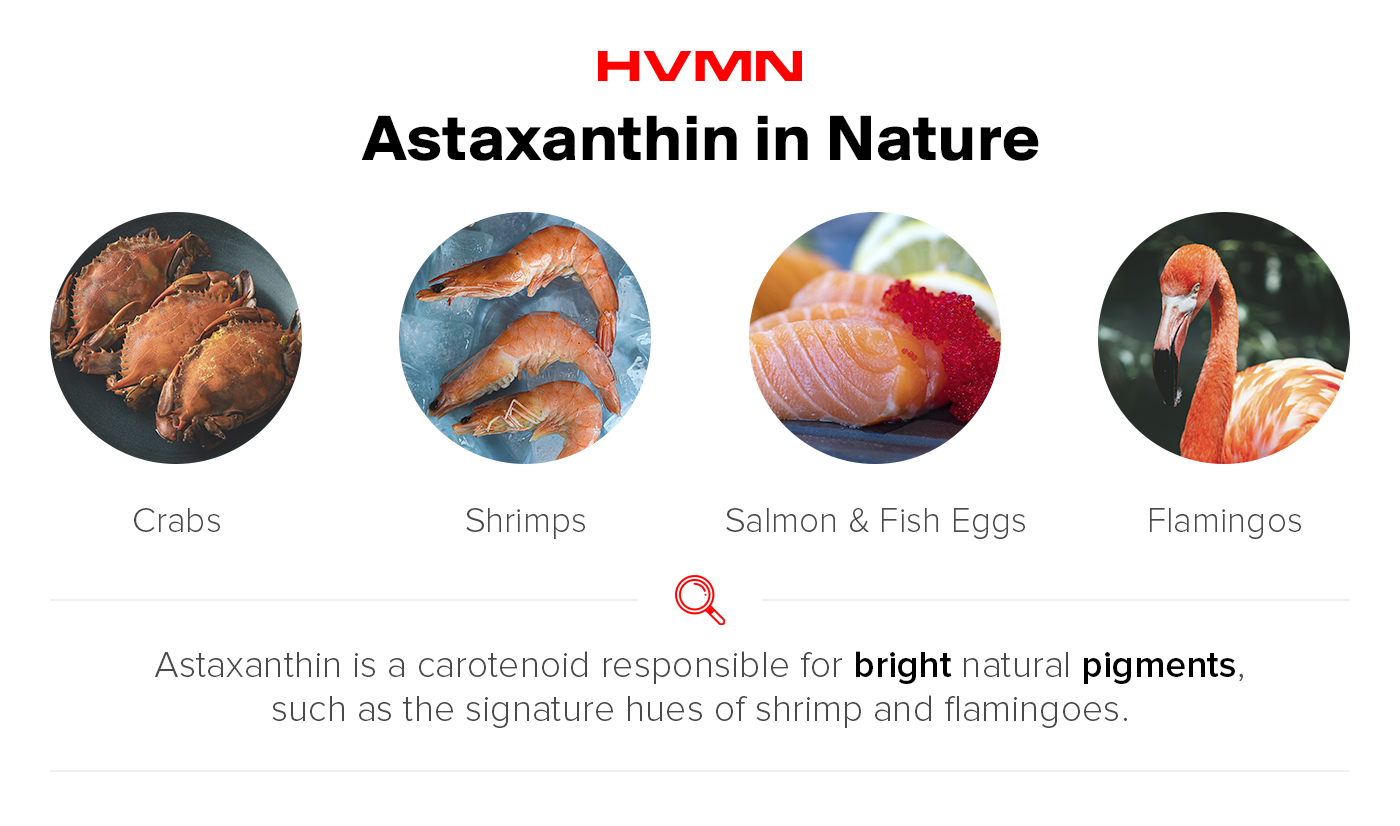 images of crabs, shrimp, salmon and flamingoes -- all pink because they consume astaxanthin.