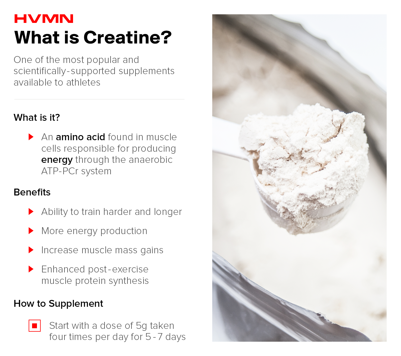 A scoop of creatine powder, illustrating what the supplement is