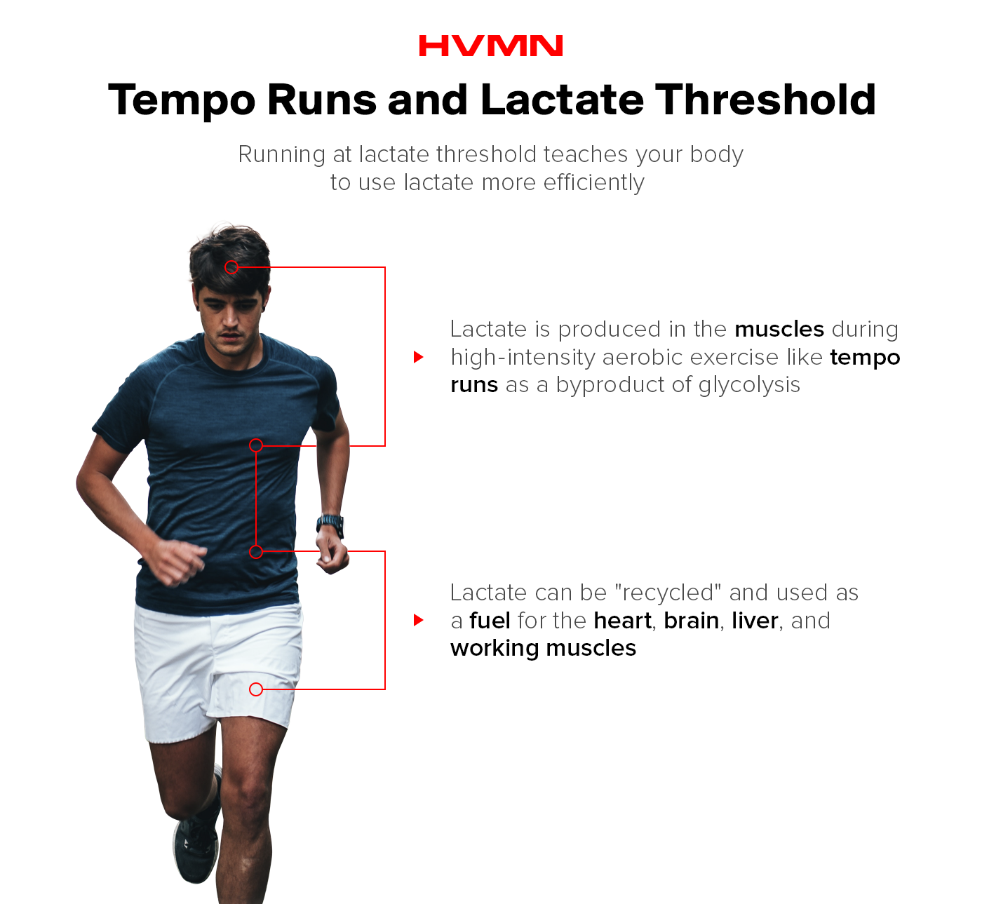 This image is showing how tempo runs teach the body to use lactate. By running at lactate threshold, the body becomes efficient at using lactate. This image shows a man running, with two arrows coming from his body. The first says that lactate is produced in the muscles during tempo runs, and is a byproduct of glycolysis. Another arrow pointing to the leg describes how lactate can be recycled and used as a fuel by the heart, brain, liver, and muscles.