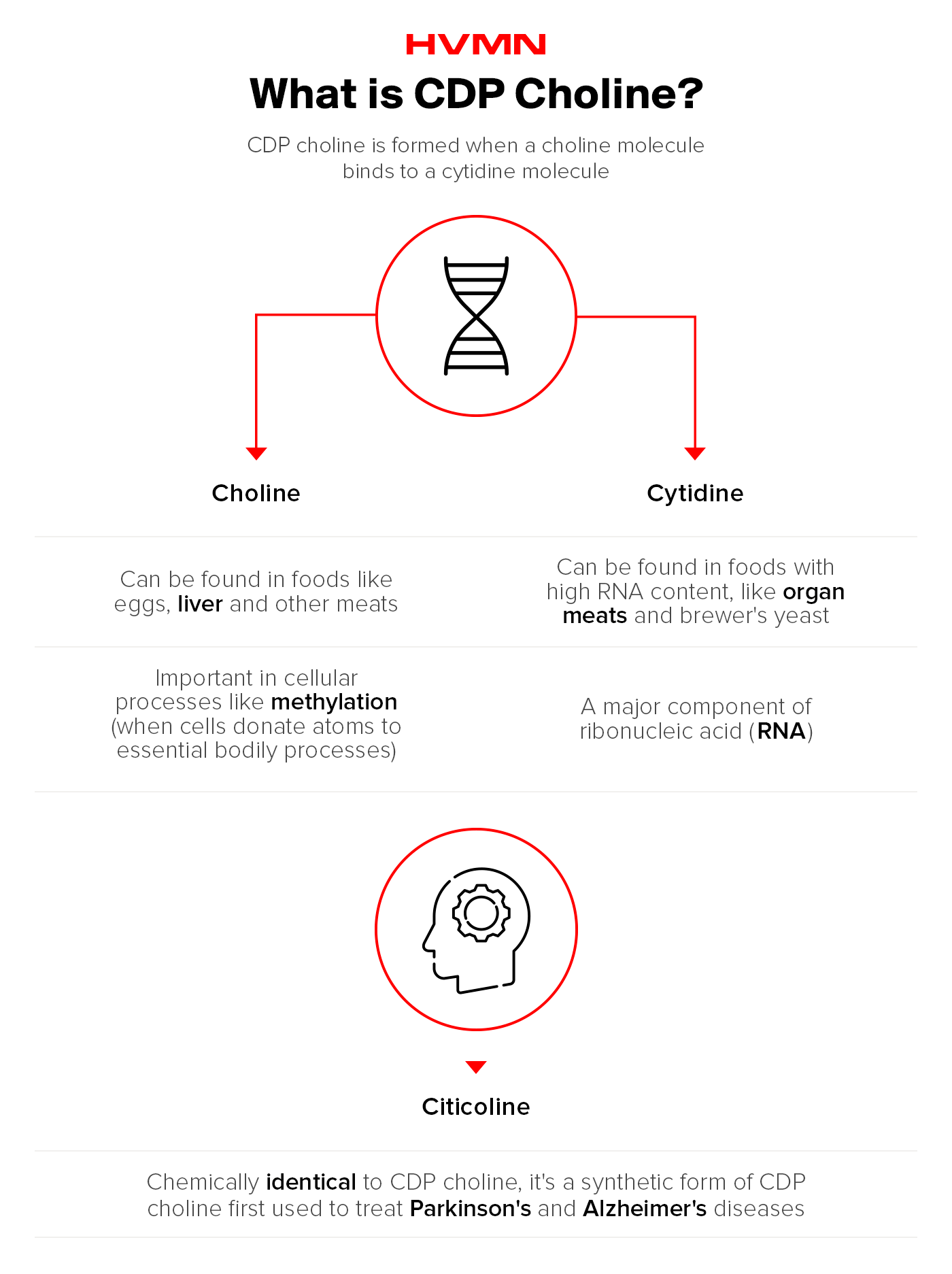 An illustration of a DNA strand, showing what CDP choline is, and how it become citicoline
