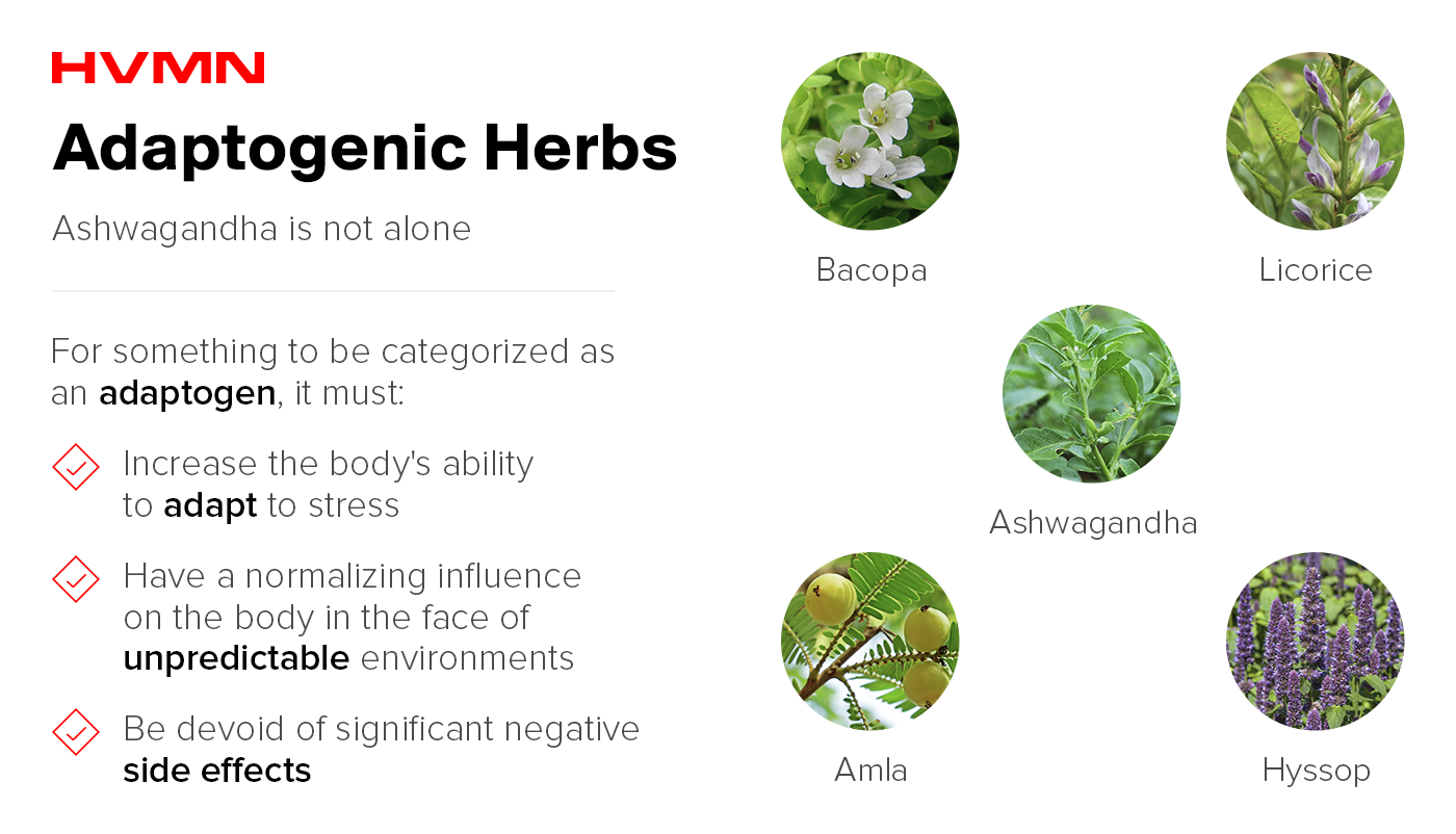 A list of different herbs that are considered adaptogens