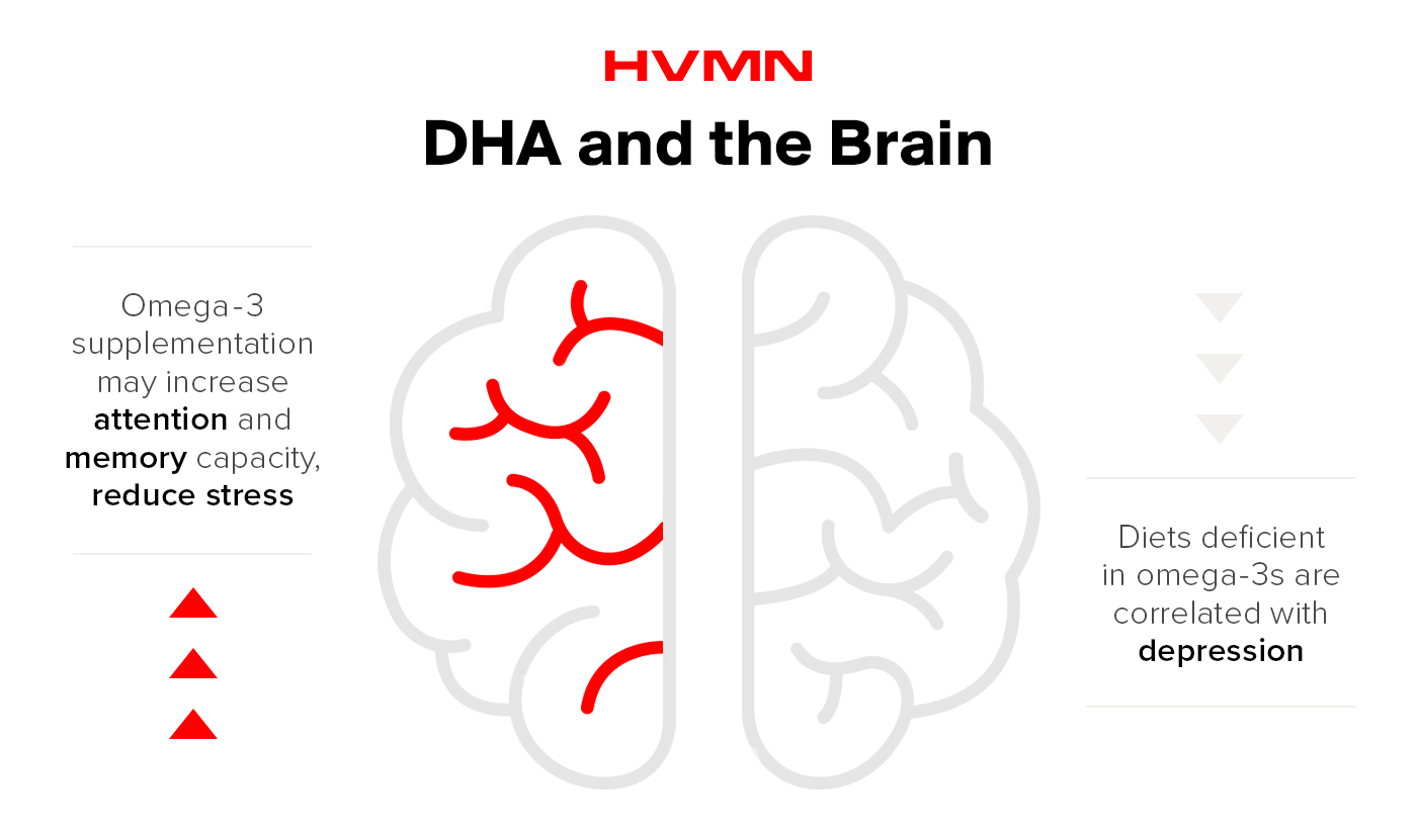 An illustration of a brain, showing how DHA can improve memory and reduce stress