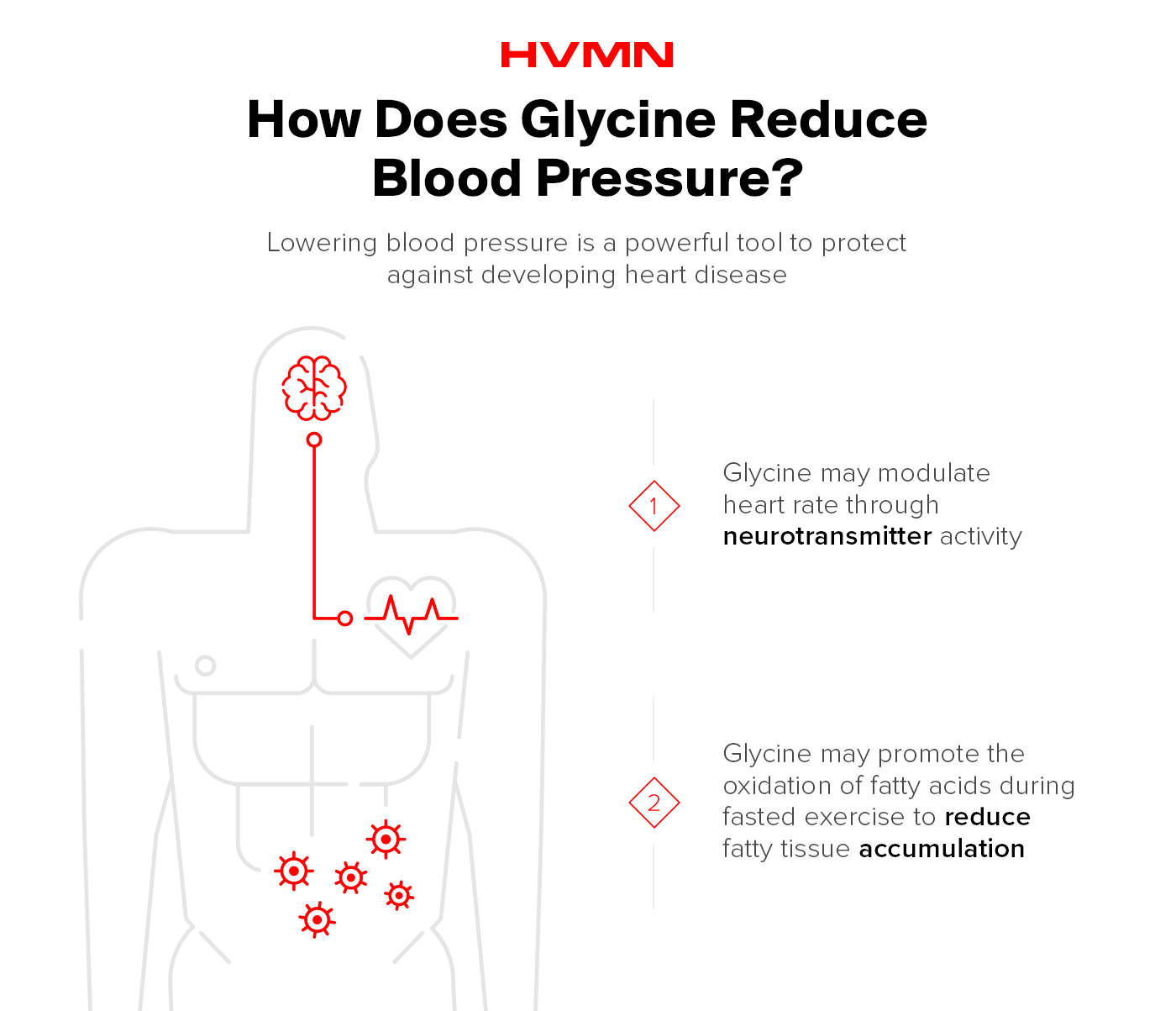 An illustration of the human body with a line connecting the heart and the brain, showing how glycine can reduce blood pressure.