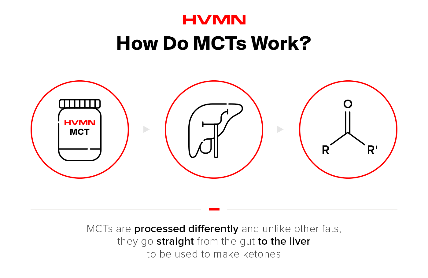 The image shows that MCTs are processed differently from other types of fats. They go straight from the gut to the liver to be used as ketones.
