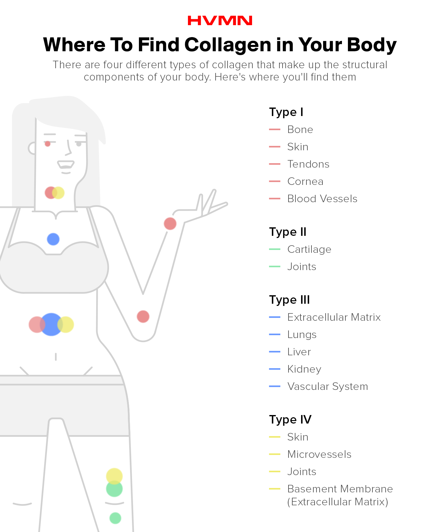 An illustration of a woman with different colored bubbles on her body, showing where, in the body, you can find collagen