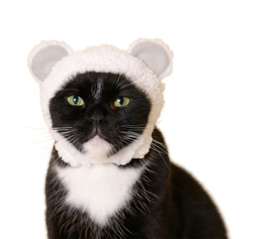 Cat Hat - Bear