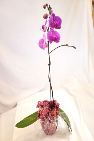 Orchid with Vase Bojagi Wrapping
