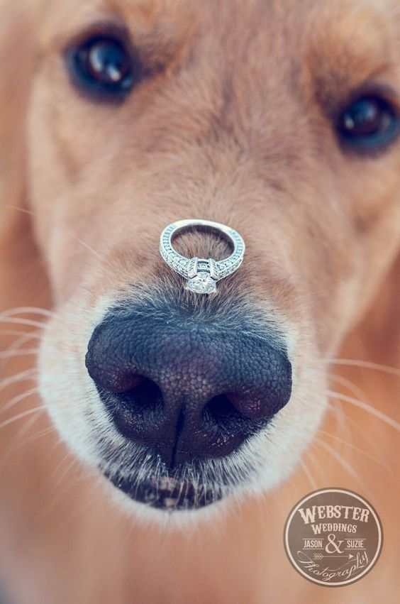 Doggy Wedding Proposal | Wedding Proposal Ideas That You're Sure to Love | My Wedding Favors