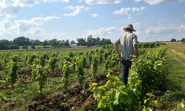 Tending the Vineyard - Trail Estate Winery